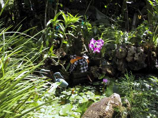 Pond Orchid